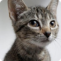 Adopt A Pet :: Sunny - Atlanta, GA