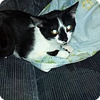 Adopt A Pet :: houdini needs a farm - Saint Albans, WV