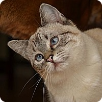 Adopt A Pet :: Verona - Davis, CA