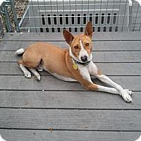 Adopt A Pet :: Cooper - Seminole, FL