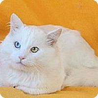Adopt A Pet :: Polar Bear - Davis, CA