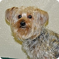 Adopt A Pet :: Angelica - Port Washington, NY