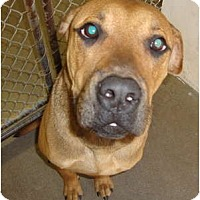 Adopt A Pet :: Hooch - Winter Haven, FL