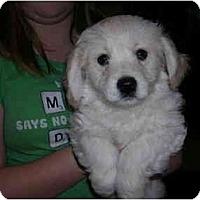 Adopt A Pet :: Mason - Glastonbury, CT