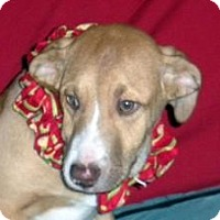 Adopt A Pet :: Jack - East Sparta, OH