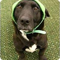Adopt A Pet :: Liza - Mocksville, NC