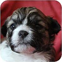 Adopt A Pet :: Hayden - La Costa, CA
