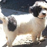 Adopt A Pet :: Chamblee - adoption pending - Norwalk, CT
