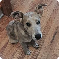 Adopt A Pet :: Fife - Knoxville, TN