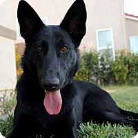 Adopt A Pet :: Holly - Yuba City, CA