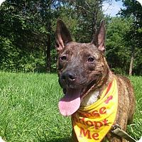 Adopt A Pet :: Roxie - Louisville, KY