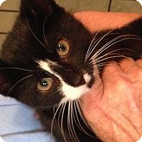 Adopt A Pet :: Rosebud - Ann Arbor, MI