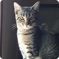 Adopt A Pet :: Gracie - Columbus, OH