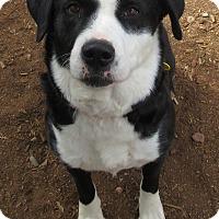 Adopt A Pet :: MARY JANE - Phoenix, AZ