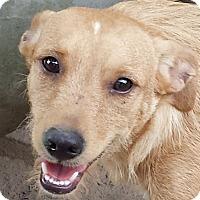 Adopt A Pet :: Bitsy & Zelda AD 03-26-16 - Preston, CT