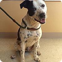Adopt A Pet :: Cooper - $25 - Woodward, OK