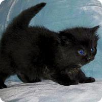 Adopt A Pet :: Pepper - Buford, GA