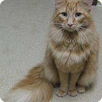 Adopt A Pet :: Sunshine - Gary, IN