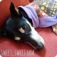 Adopt A Pet :: Sam - Salt Lake City, UT