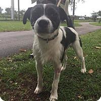 Adopt A Pet :: Junior - Boca Raton, FL