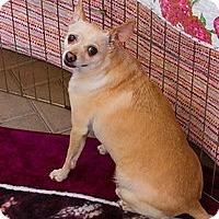 Adopt A Pet :: Hemi, Precious Soul - Corona, CA