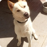 Adopt A Pet :: Milo (BH) - Santa Ana, CA