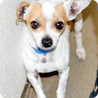 Adopt A Pet :: Bob - San Jacinto, CA