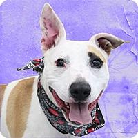 Adopt A Pet :: Rena - Cincinnati, OH