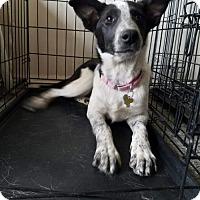 Adopt A Pet :: Sister - Salt Lake City, UT