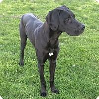 Adopt A Pet :: Colt - Martinsburg, WV