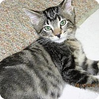 Adopt A Pet :: George - Owatonna, MN