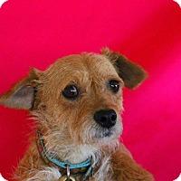 Adopt A Pet :: Daisy - Crosbyton, TX