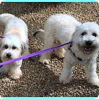Adopt A Pet :: Giddy & Barry - Phoenix, AZ