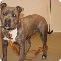 Adopt A Pet :: Titan - Wildomar, CA