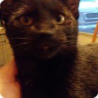 Adopt A Pet :: Chad - Columbus, OH
