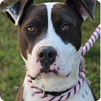 Adopt A Pet :: ACAIA - Red Bluff, CA