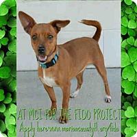 Adopt A Pet :: PENNY - Ocala, FL