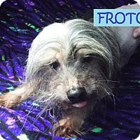 Adopt A Pet :: Froto - Batesville, AR
