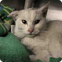 Adopt A Pet :: WINDSOR - Frisco, CO