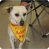 Corgi Mix Dog for adoption in Bakersfield, California - Jack