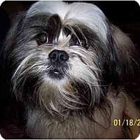 Adopt A Pet :: Gismo - Honaker, VA