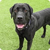 Adopt A Pet :: Susan - Meridian, ID