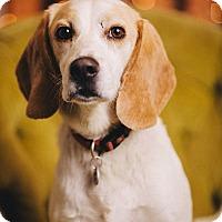 Adopt A Pet :: Mateo - Portland, OR