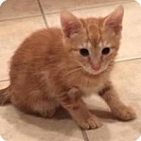 Adopt A Pet :: Brandy - East Hanover, NJ