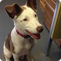 Adopt A Pet :: Sassy - Meridian, ID