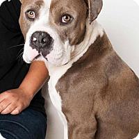 Adopt A Pet :: *SAM - Sacramento, CA