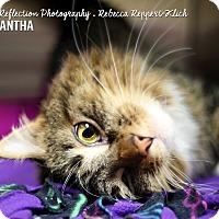 Adopt A Pet :: Samantha - Appleton, WI