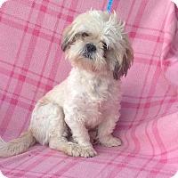 Adopt A Pet :: Manning - Corona, CA