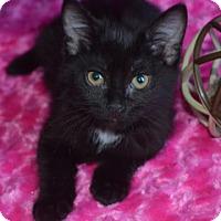 Adopt A Pet :: Smudge - Savannah, GA