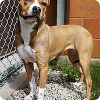 Adopt A Pet :: Rosie - Appleton, WI